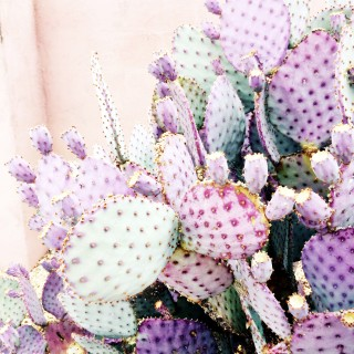 prickly pear via @theproperblog on Instagram