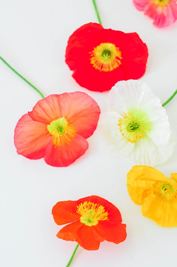 Beautiful Poppy Wallpaper