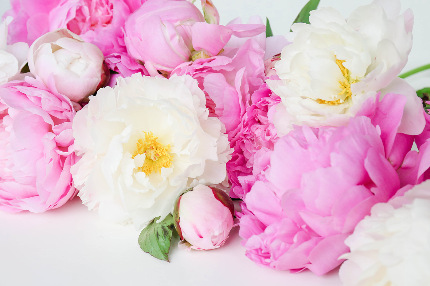 properprintables  colorful peonies wallpaper download