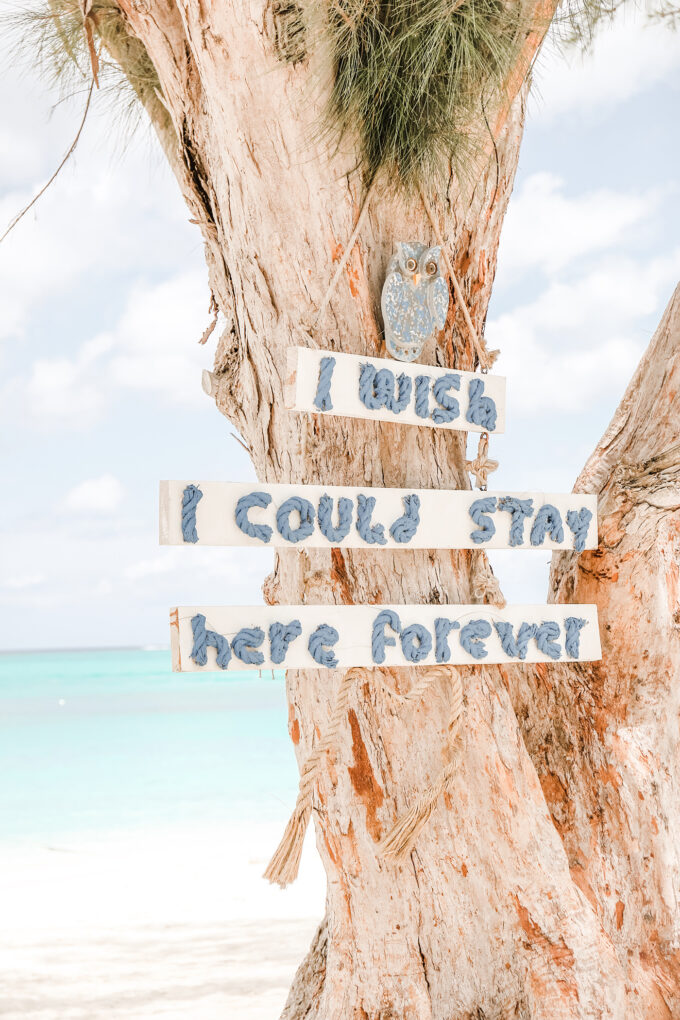 tree with forever sign hanging on beach