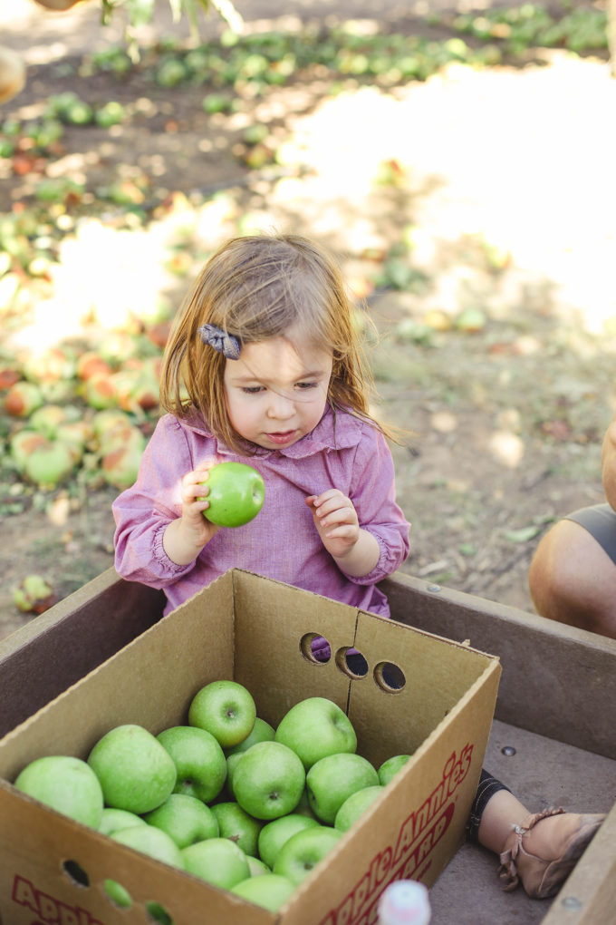 little girl looking at apples