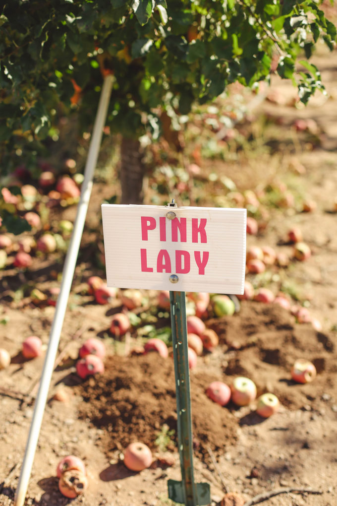 pink lady apple orchard